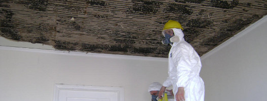 Mold Removal in North Carolina